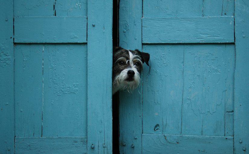 Petey peeking through door